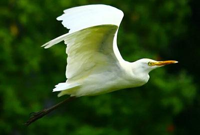 Concejales de Asunción violan Reserva Ecológica y atentan contra el valioso Santuario de Aves de la Bahía
